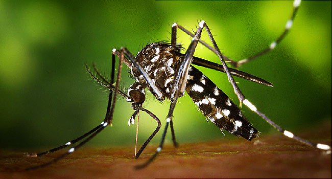 Zika devestating Olympic golf